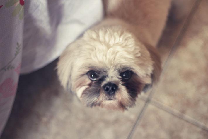 meu-cachorro-TAG-04