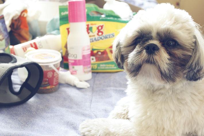 meu-cachorro-TAG