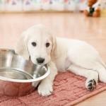 Itens básicos para ter um cachorro em casa