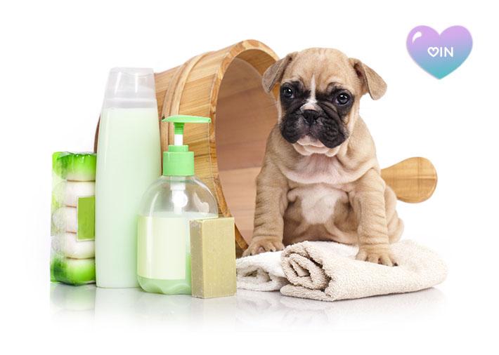 Produtos de higiene para cães