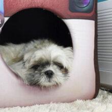 Como ensinar o cachorro a fazer xixi e cocô no lugar certo?