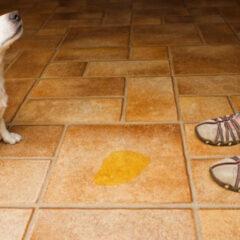 Dicas de higienização para quem tem pets em casa