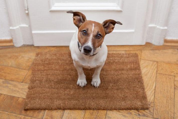 Limpeza e higienização para pets