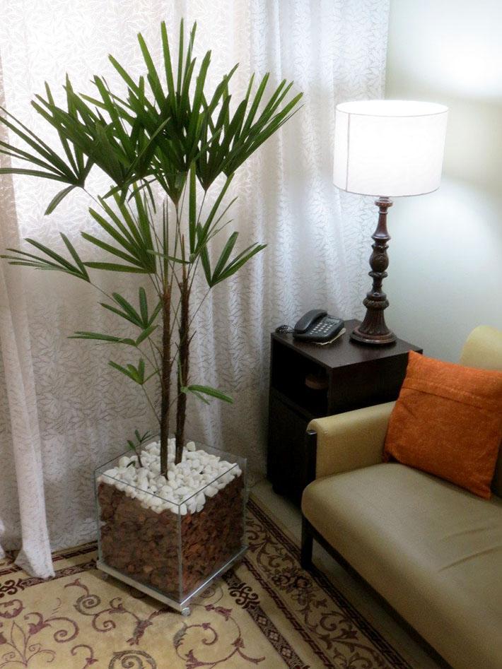 Palmeira Ráfia | Plantas para dentro de casa