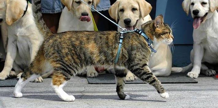 Passear com gato: dicas!