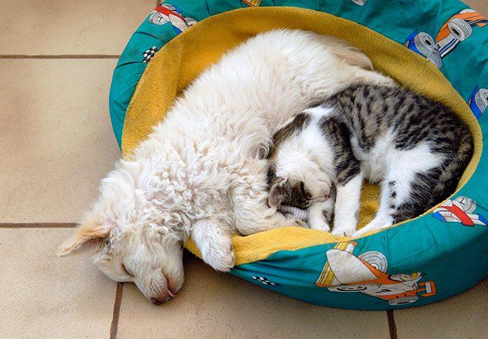 Caminha Pet - Cachorro e Gato