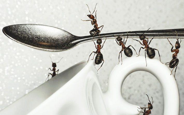 Combater formigas