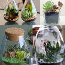 Terrário | Veja como fazer os mini jardins em potes de vidro