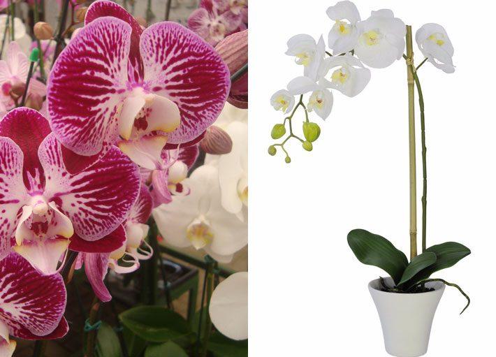 10 plantas para dentro de casa | Orquídea