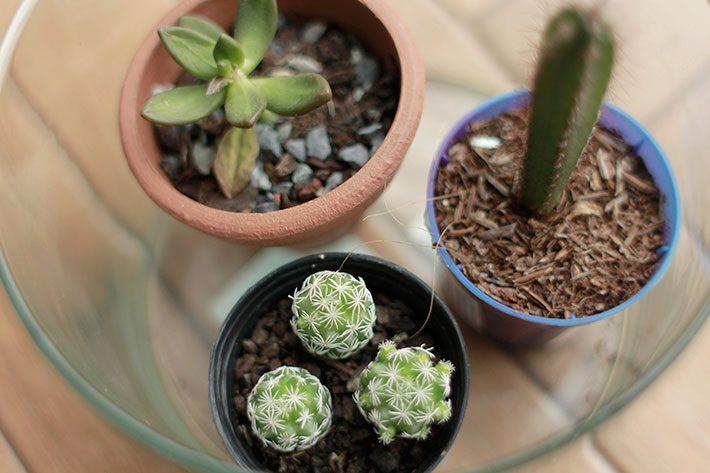 10 plantas para dentro de casa