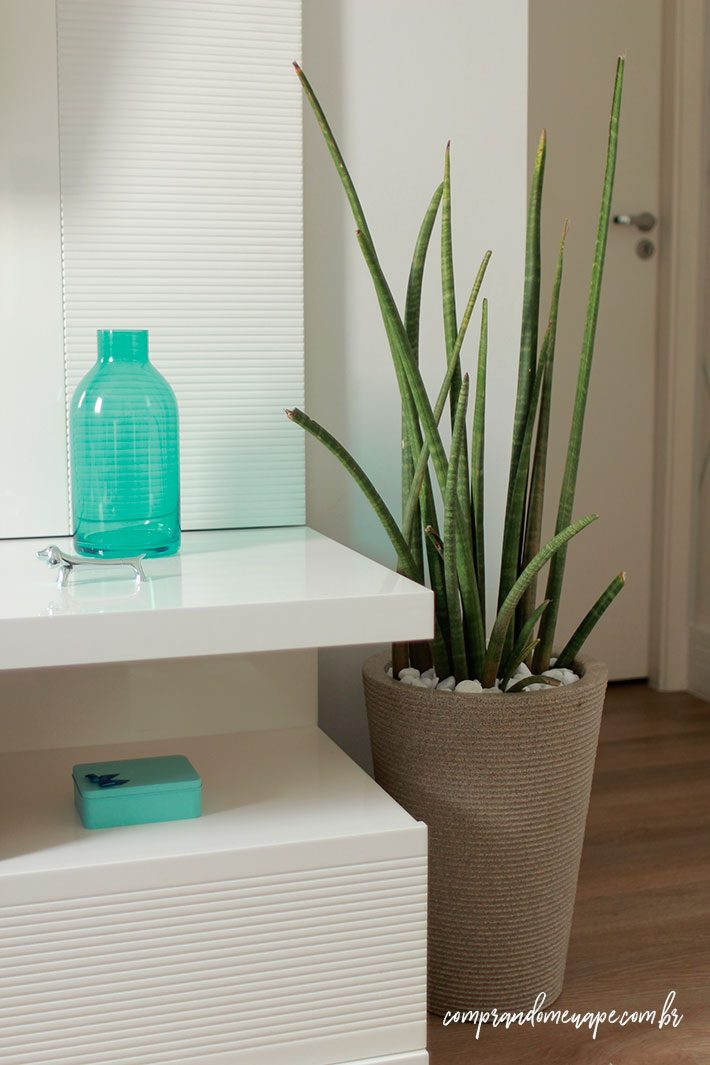 10 plantas para dentro de casa | Lança de São jorge